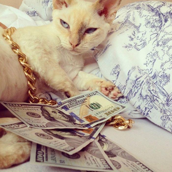 21 gatos gângsteres ricos esbanjando sua riqueza 13