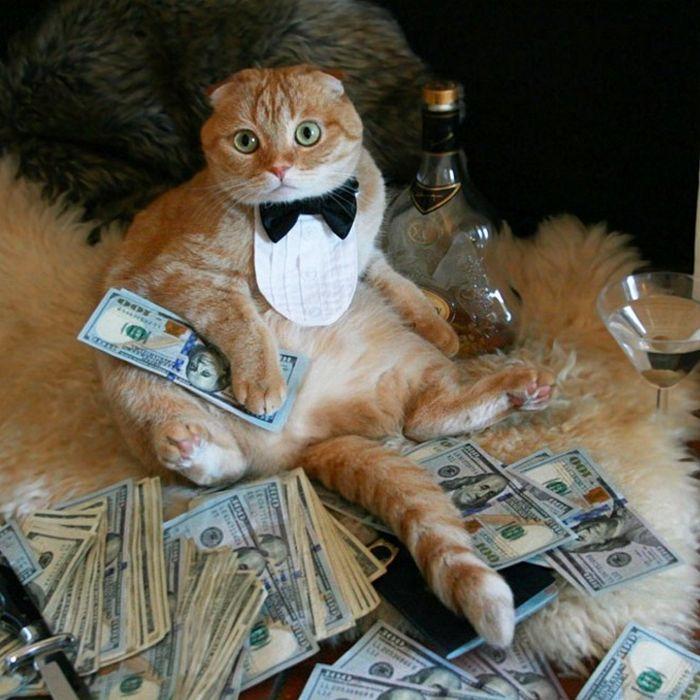 21 gatos gângsteres ricos esbanjando sua riqueza 14