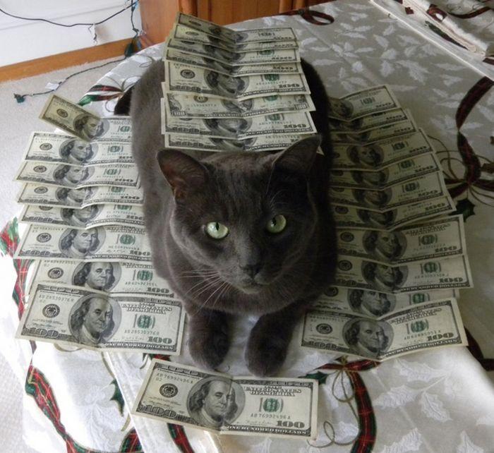 21 gatos gângsteres ricos esbanjando sua riqueza 15