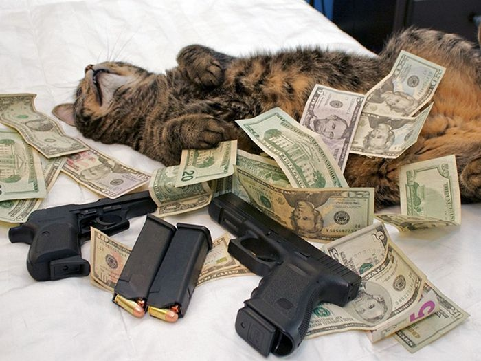 21 gatos gângsteres ricos esbanjando sua riqueza 16
