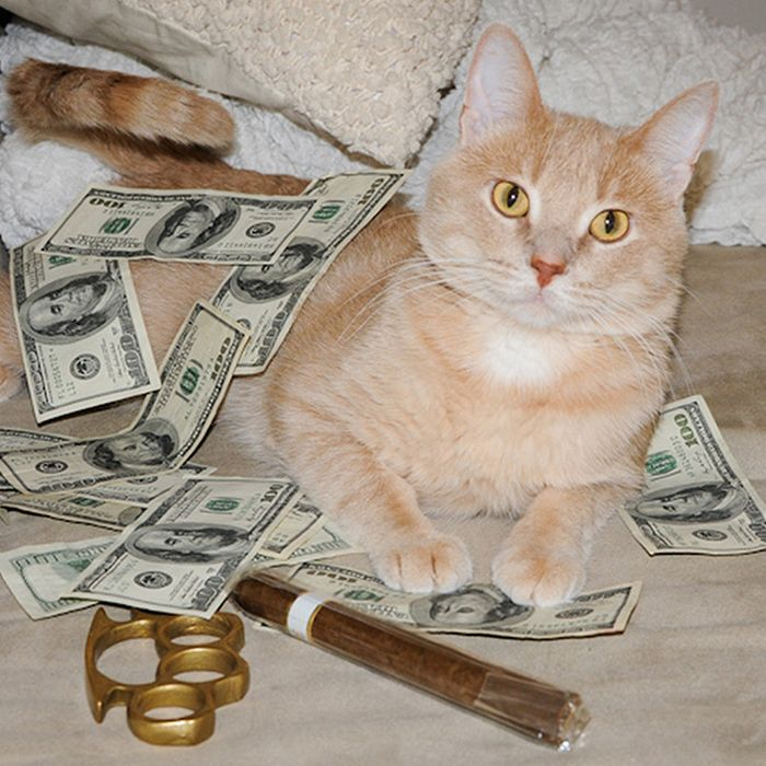 21 gatos gângsteres ricos esbanjando sua riqueza 17