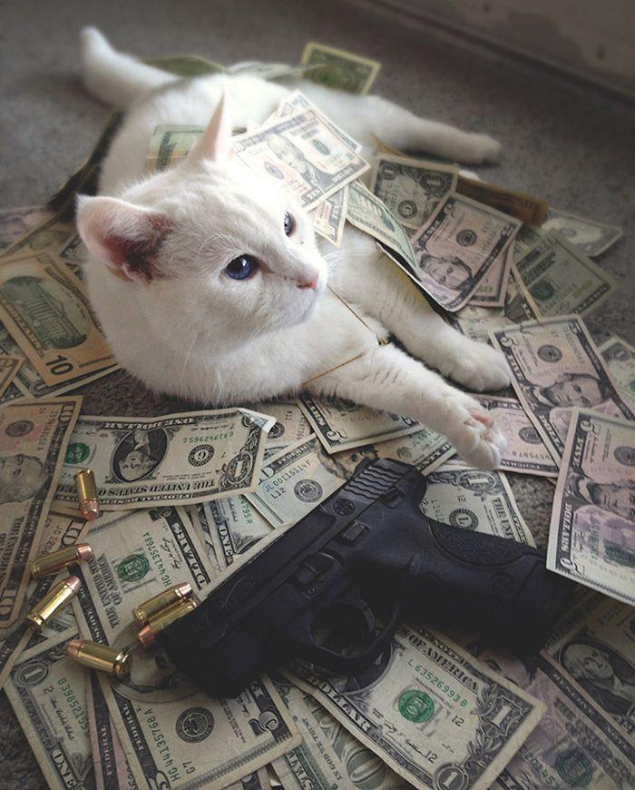 21 gatos gângsteres ricos esbanjando sua riqueza 18