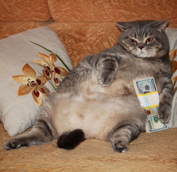 21 gatos gângsteres ricos esbanjando sua riqueza 19