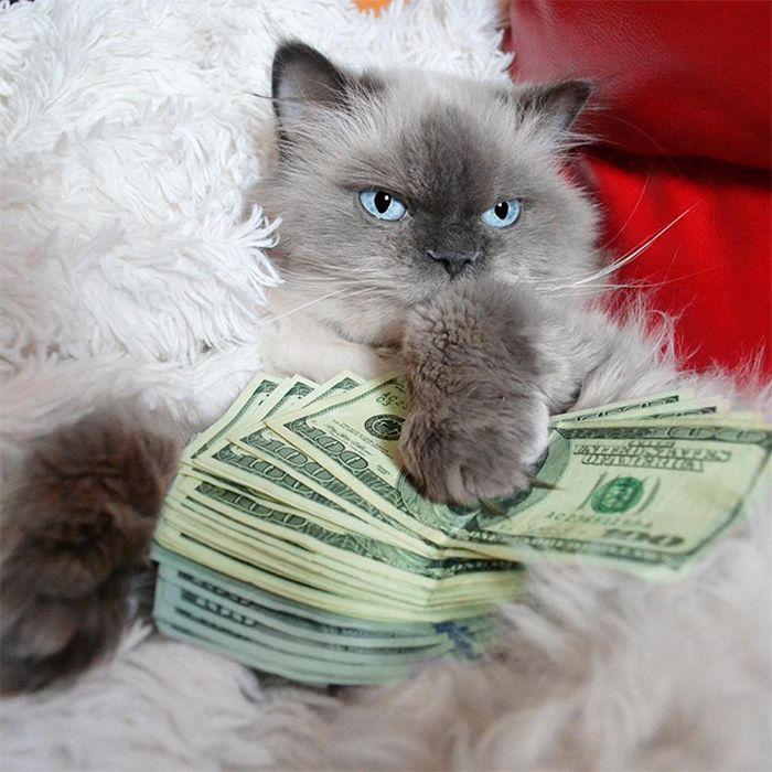 21 gatos gângsteres ricos esbanjando sua riqueza 20