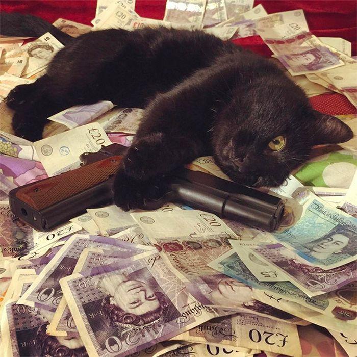 21 gatos gângsteres ricos esbanjando sua riqueza 21