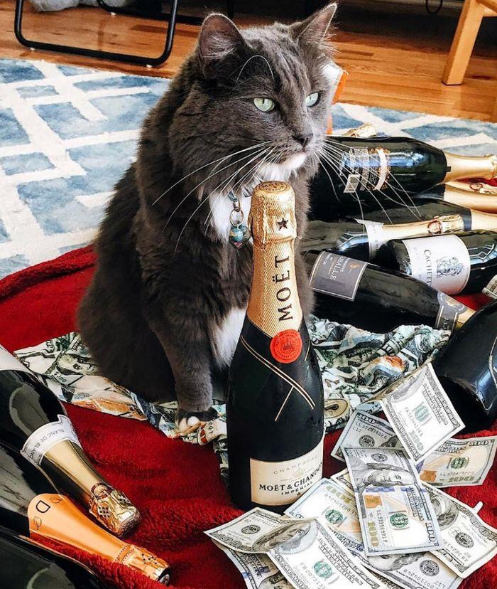 21 gatos gângsteres ricos esbanjando sua riqueza 22