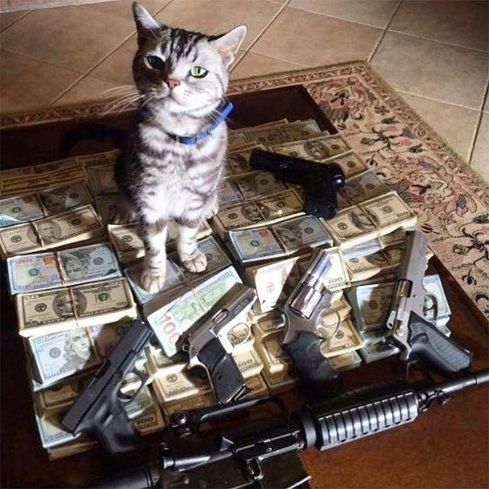 21 gatos gângsteres ricos esbanjando sua riqueza 23