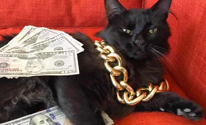21 gatos gângsteres ricos esbanjando sua riqueza 2