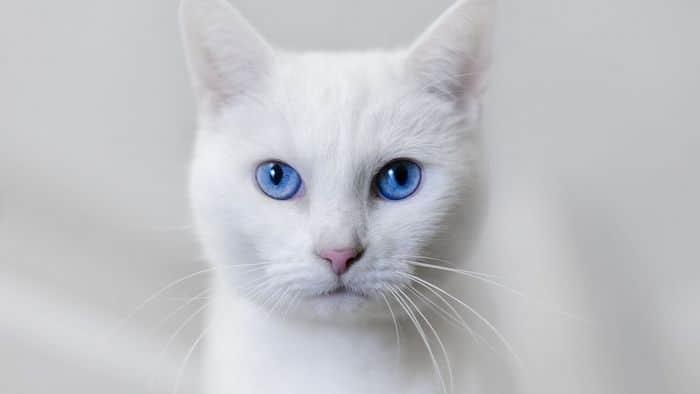 Ideias criativas para nomes para gatos brancos 3