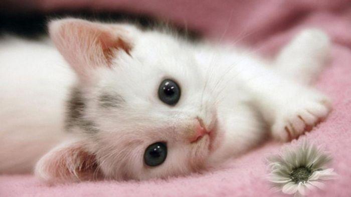 Ideias criativas para nomes para gatos brancos 5