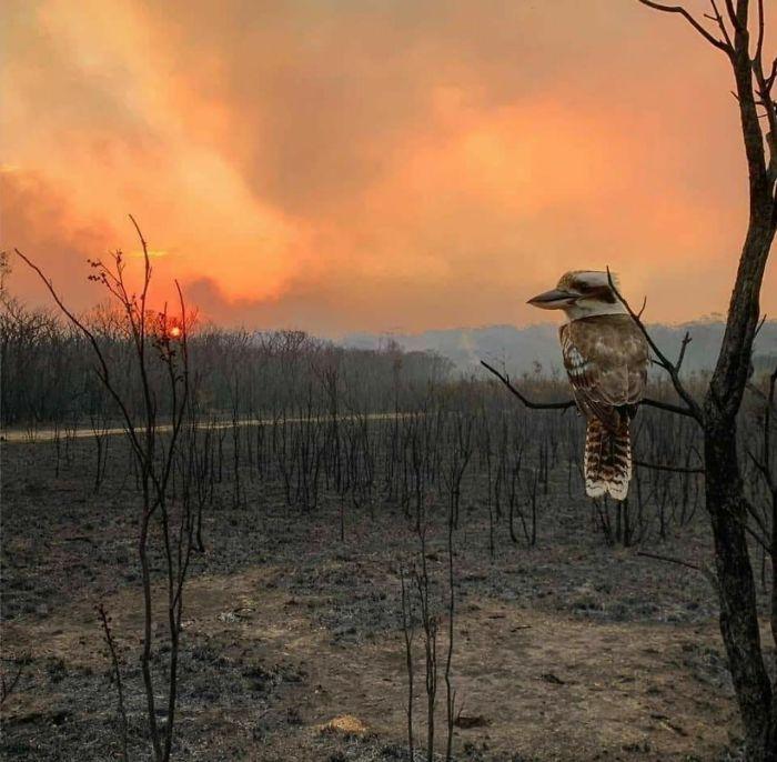 36 imagens que mostram os horrores dos incêndios na Austrália 9