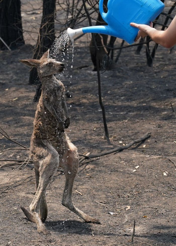 36 imagens que mostram os horrores dos incêndios na Austrália 23