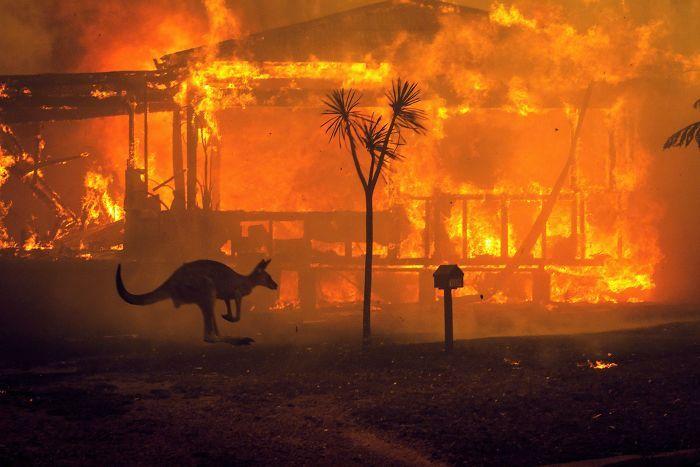 36 imagens que mostram os horrores dos incêndios na Austrália 24