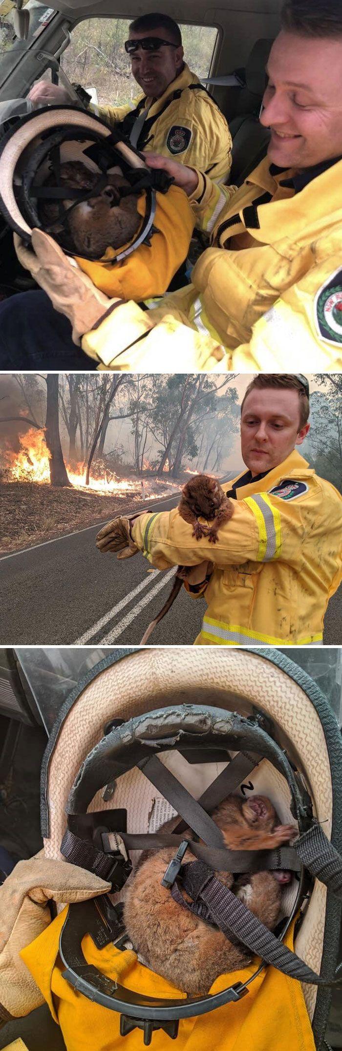36 imagens que mostram os horrores dos incêndios na Austrália 34