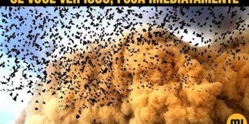 Se você ver muitos pássaros voando, fuja imediatamente! 8
