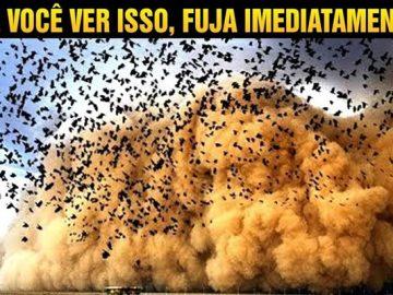 Se você ver muitos pássaros voando, fuja imediatamente! 4
