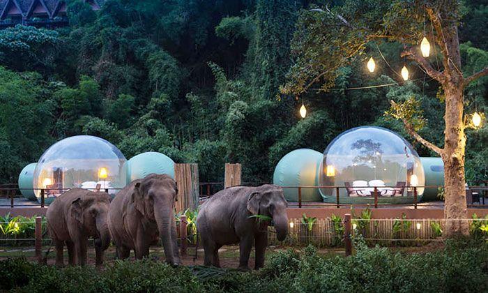 Você pode dormir em uma bolha transparente cercada por elefantes 2