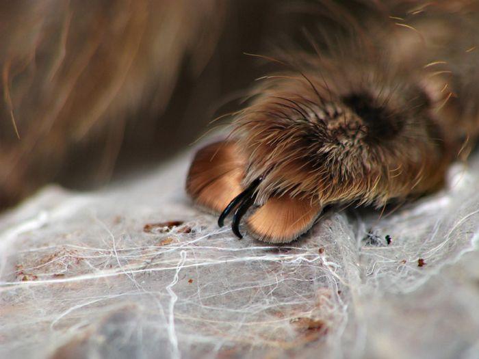 Você sabia que as aranhas têm patas minúsculas adoráveis? 8