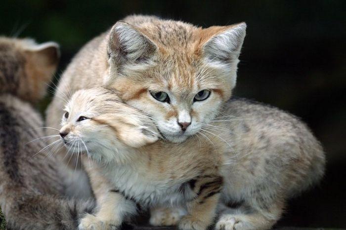 12 animais perigosos que geralmente achamos bonitinhos e indefesos 6
