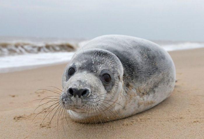 12 animais perigosos que geralmente achamos bonitinhos e indefesos 10