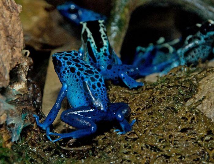 12 animais perigosos que geralmente achamos bonitinhos e indefesos 13