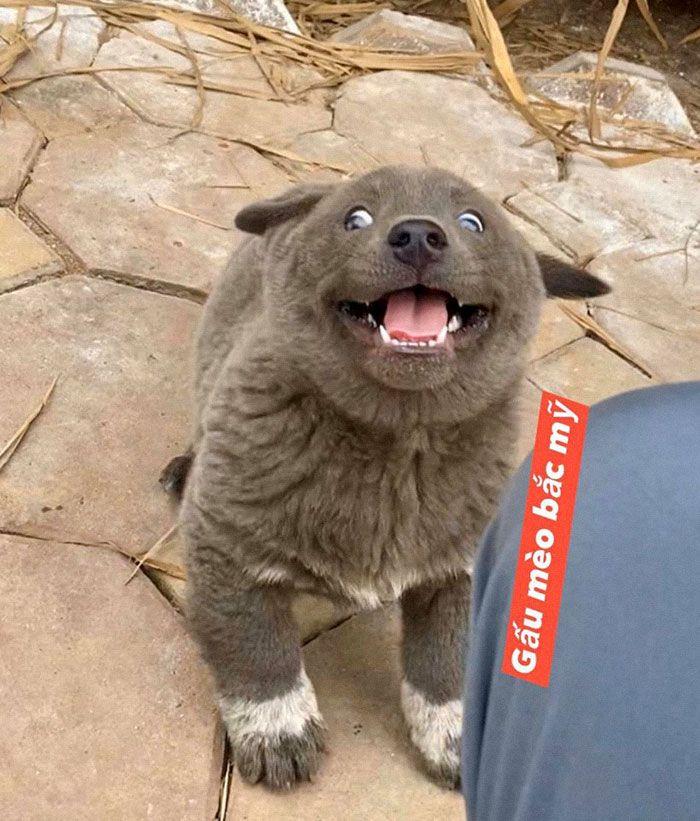 Este cão-gato está conquistando o coração das pessoas por sua aparência 10