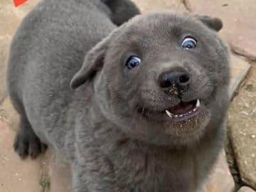 Este cão-gato está conquistando o coração das pessoas por sua aparência 1