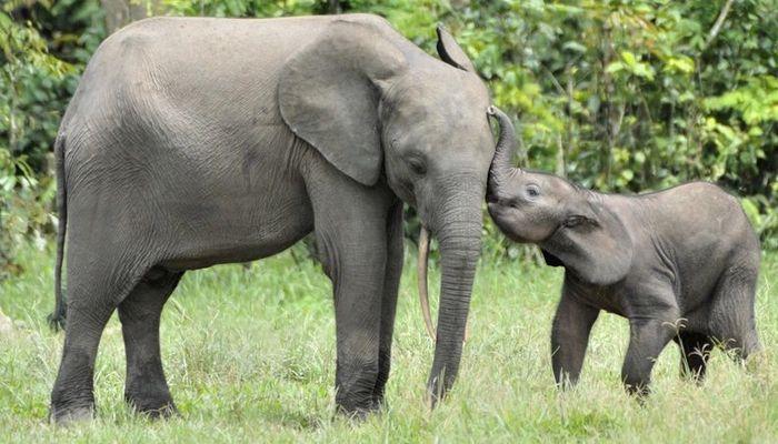 26 fatos inusitados do reino animal 2