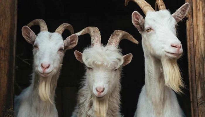 26 fatos inusitados do reino animal 3
