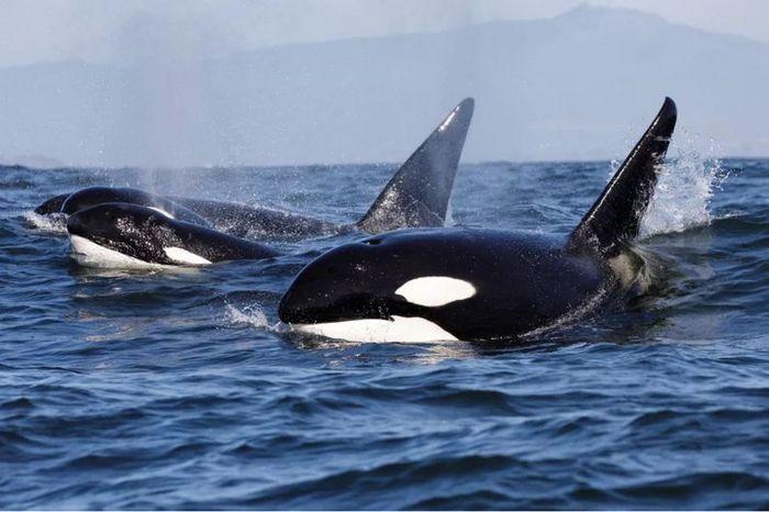 26 fatos inusitados do reino animal 4