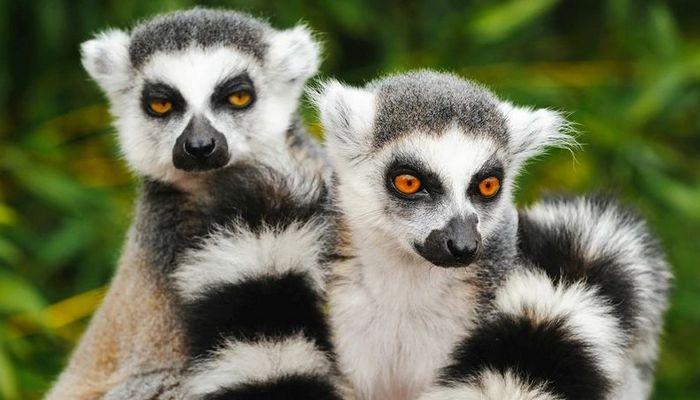 26 fatos inusitados do reino animal 7