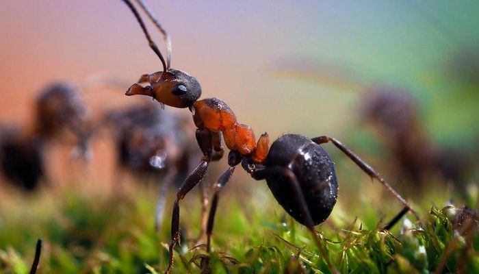 26 fatos inusitados do reino animal 10