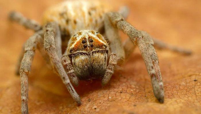 26 fatos inusitados do reino animal 11