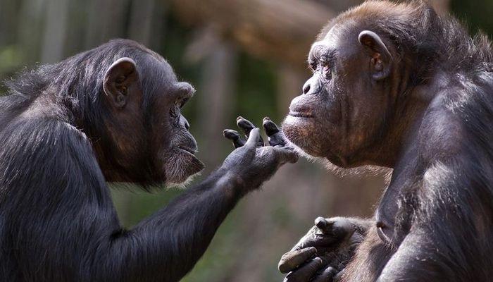 26 fatos inusitados do reino animal 12