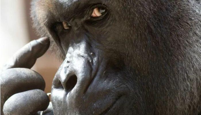 26 fatos inusitados do reino animal 14