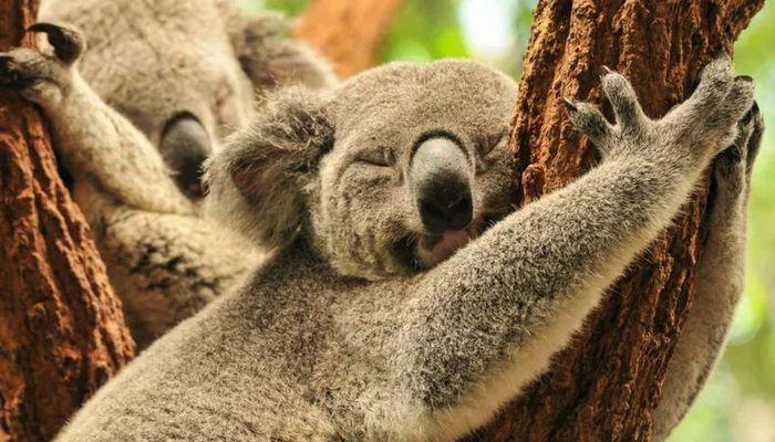 26 fatos inusitados do reino animal 15