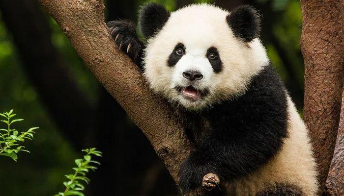 26 fatos inusitados do reino animal 18