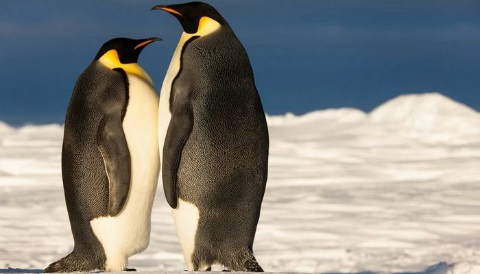 26 fatos inusitados do reino animal 19