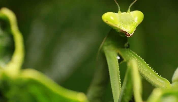 26 fatos inusitados do reino animal 22