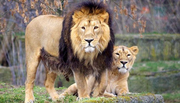 26 fatos inusitados do reino animal 24