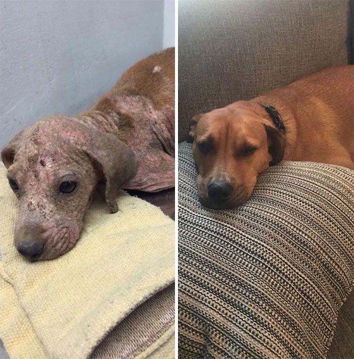 32 fotos de cachorros antes e depois da adoção que derreterão seu coração 2
