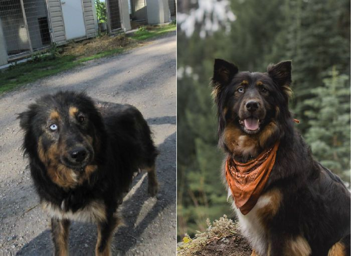 32 fotos de cachorros antes e depois da adoção que derreterão seu coração 7
