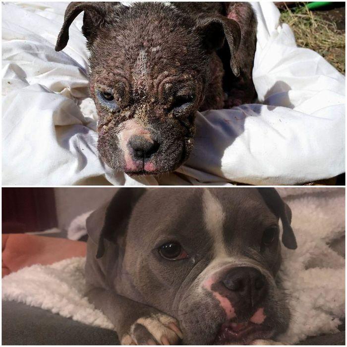 32 fotos de cachorros antes e depois da adoção que derreterão seu coração 8
