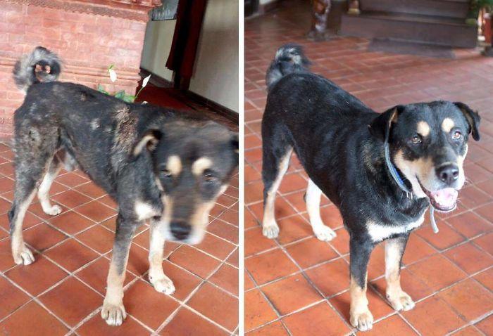 32 fotos de cachorros antes e depois da adoção que derreterão seu coração 11