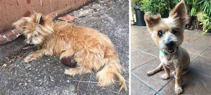 32 fotos de cachorros antes e depois da adoção que derreterão seu coração 16