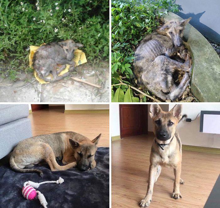 32 fotos de cachorros antes e depois da adoção que derreterão seu coração 17