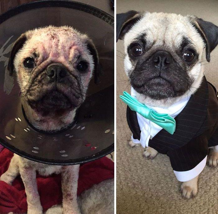 32 fotos de cachorros antes e depois da adoção que derreterão seu coração 18