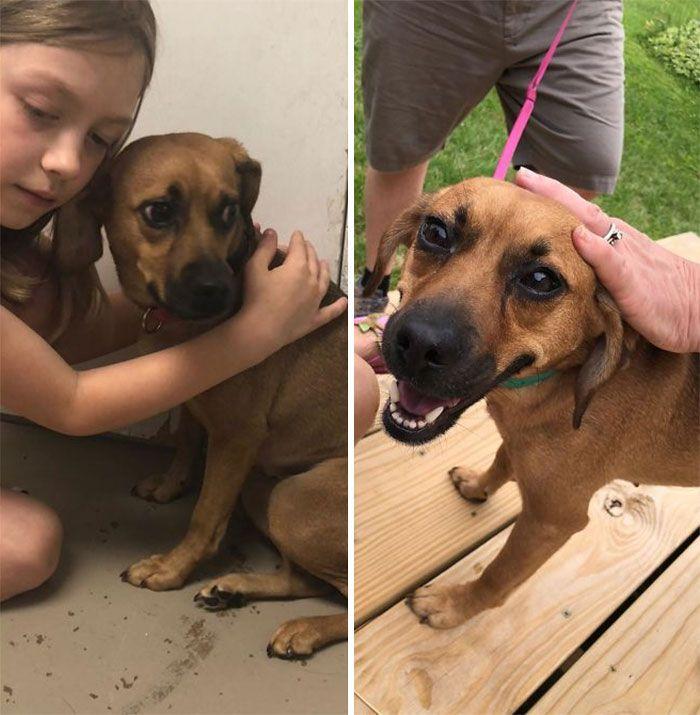 32 fotos de cachorros antes e depois da adoção que derreterão seu coração 19