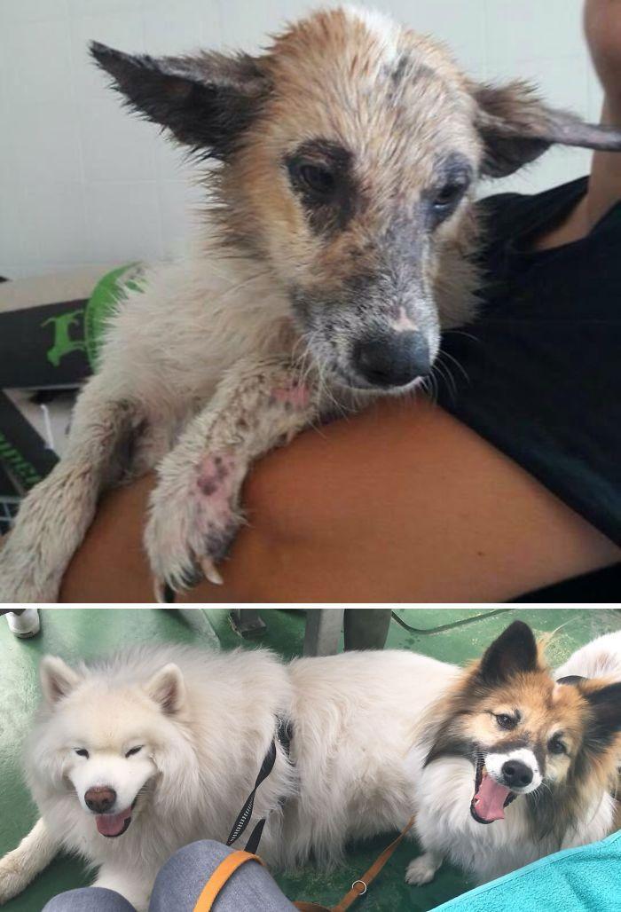 32 fotos de cachorros antes e depois da adoção que derreterão seu coração 21