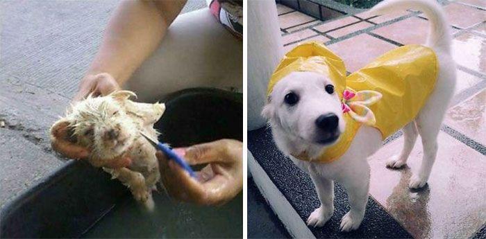 32 fotos de cachorros antes e depois da adoção que derreterão seu coração 28